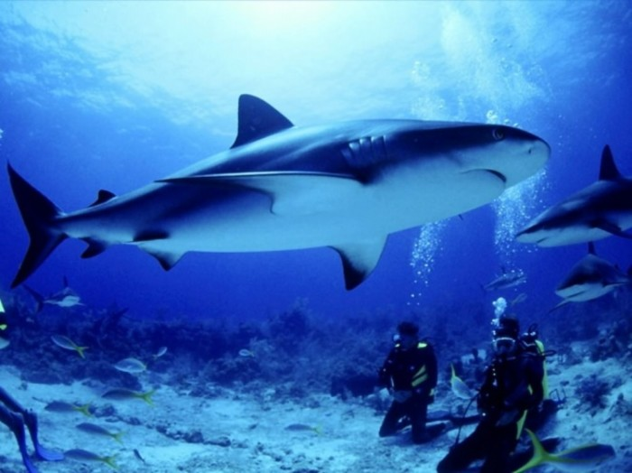 壁纸 动物 海底 海底世界 海洋馆 水族馆 鱼 鱼类 700_524图片